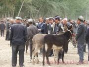 kashgar-lifestock-market-1
