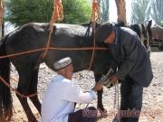 kashgar-lifestock-market-10