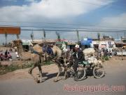 kashgar-lifestock-market-11