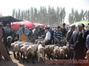 kashgar-lifestock-market-12