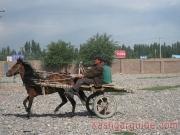 kashgar-lifestock-market-15