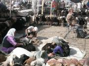 kashgar-lifestock-market-19