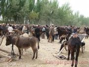 kashgar-lifestock-market-2