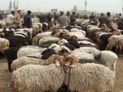 kashgar-lifestock-market-4