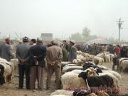 kashgar-lifestock-market-5