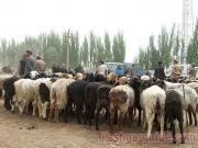 kashgar-lifestock-market-6