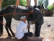 kashgar-lifestock-market-8