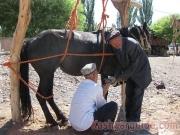 kashgar-lifestock-market-9