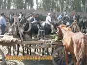 kashgar-sunday-bazzar-14
