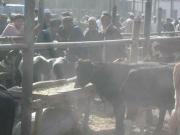 kashgar-sunday-bazzar-9